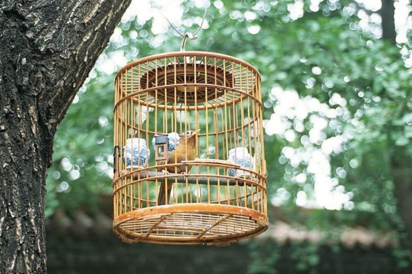 鸟笼放哪儿